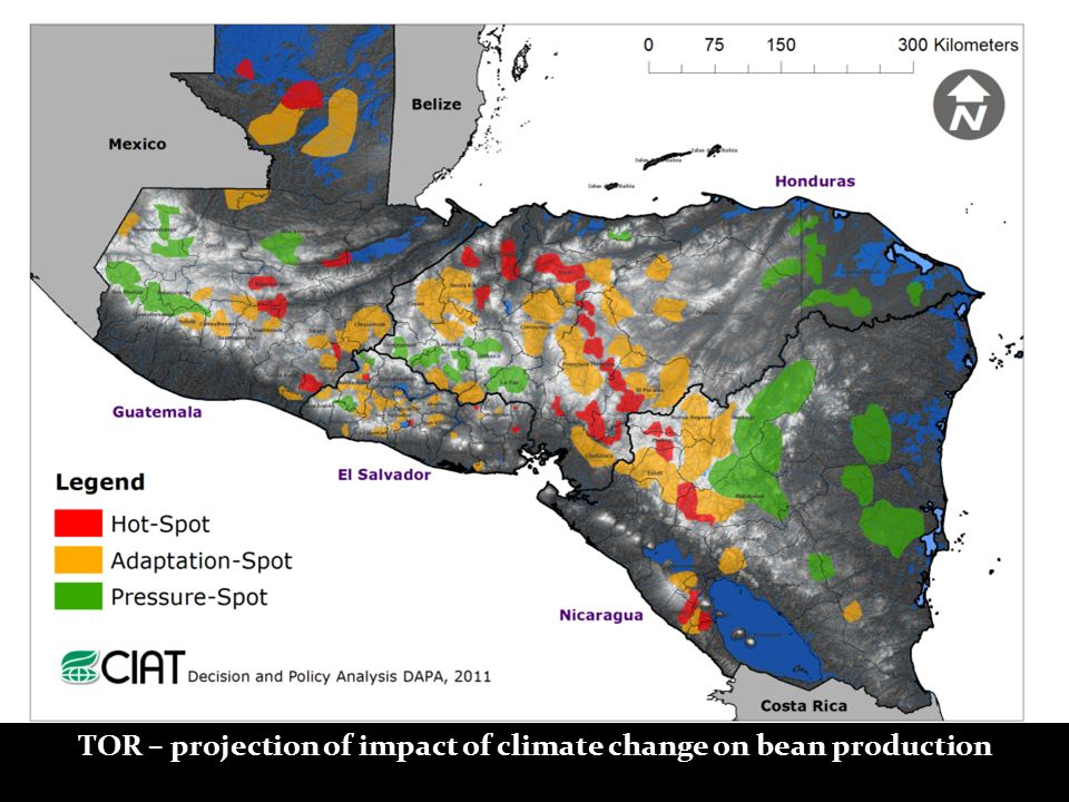 TOR – projection of impact of climate change on bean production