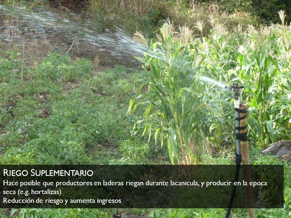 Riego Suplementario Hace posible que productores en laderas riegan durante lacanicula, y producir en la epoca seca (e.g.