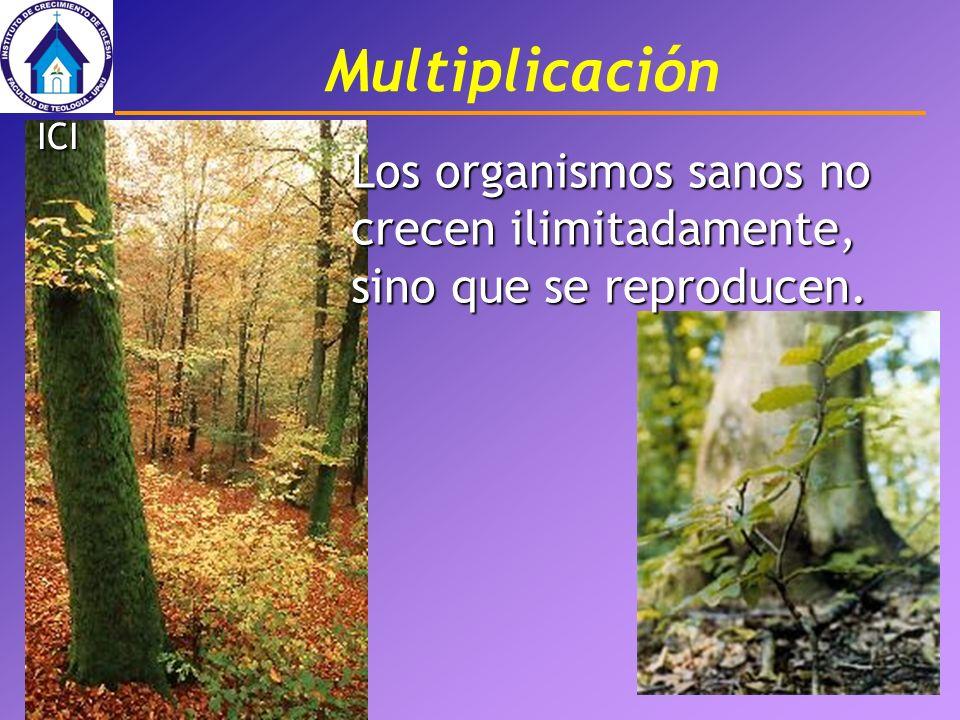 Multiplicación ICI Los organismos sanos no crecen ilimitadamente, sino que se reproducen.
