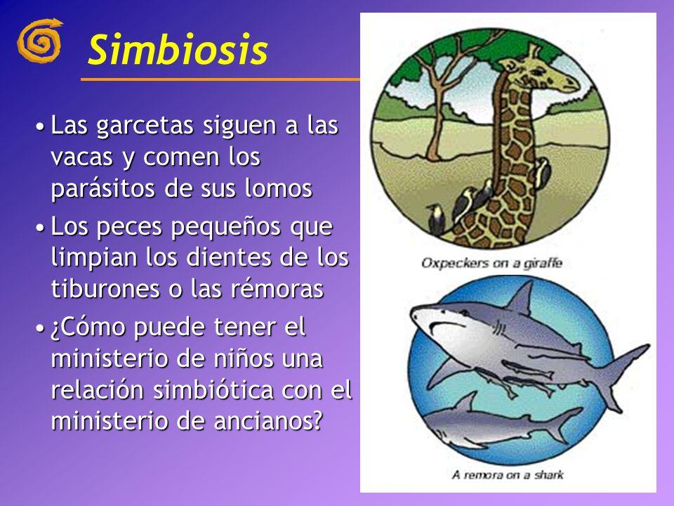 Simbiosis Las garcetas siguen a las vacas y comen los parásitos de sus lomos.