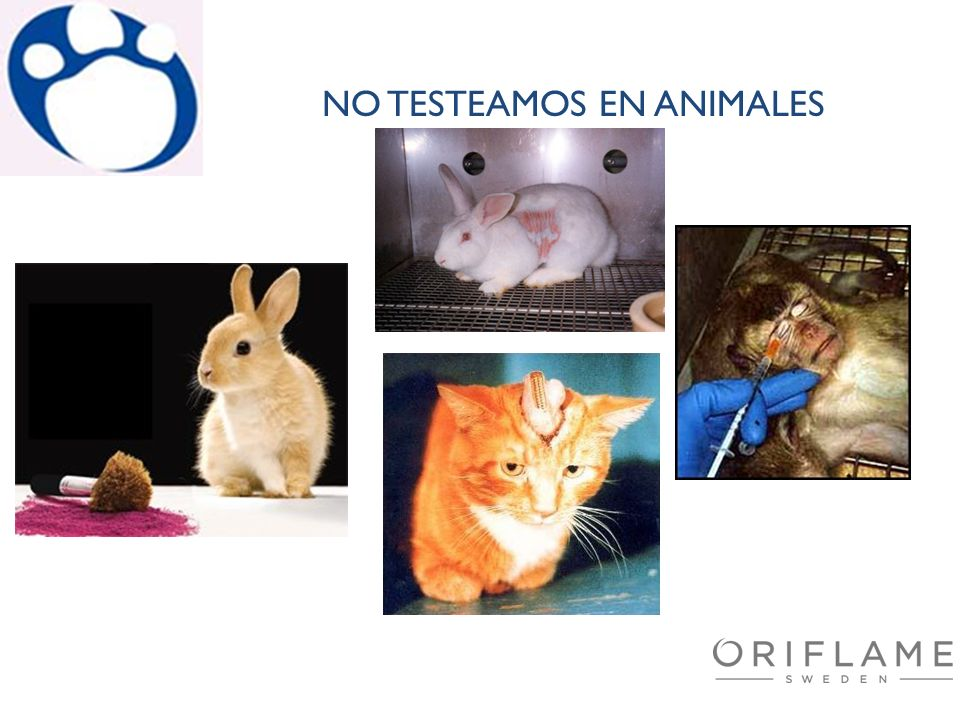 NO TESTEAMOS EN ANIMALES