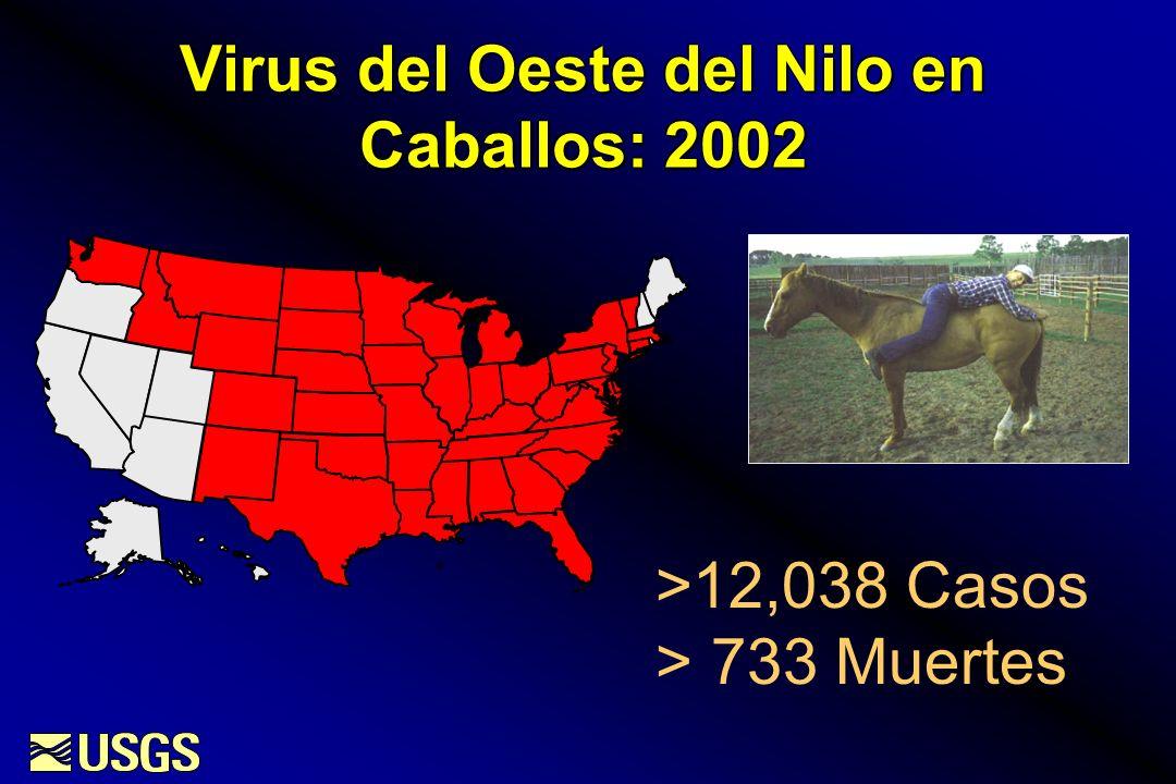 Virus del Oeste del Nilo en Caballos: 2002