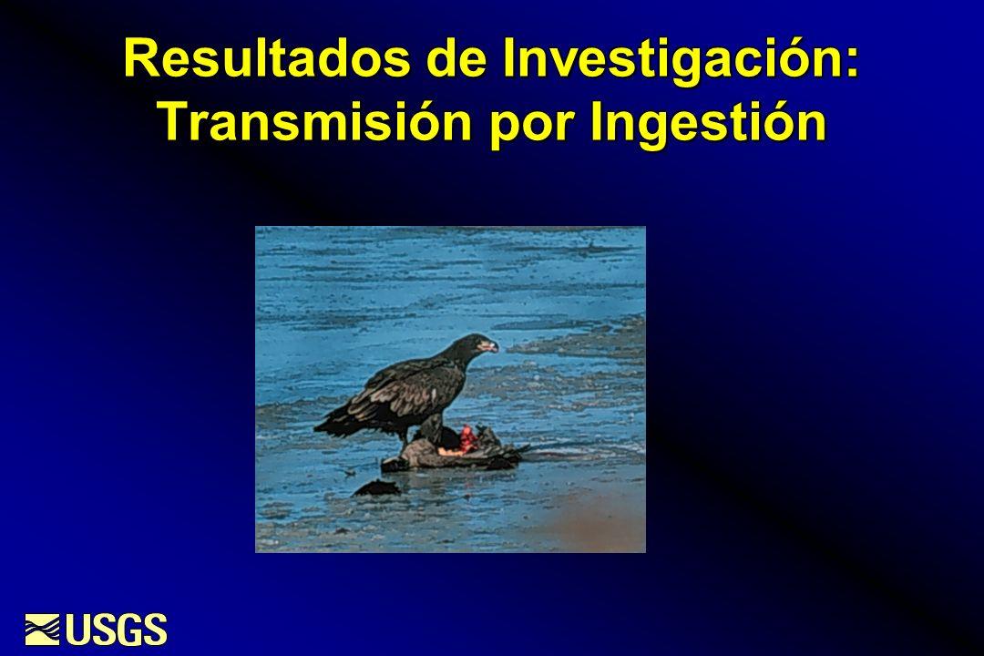 Resultados de Investigación: Transmisión por Ingestión