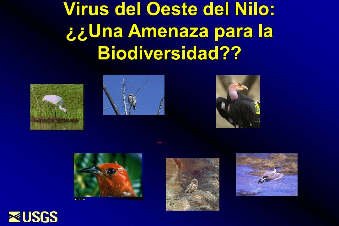Virus del Oeste del Nilo: ¿¿Una Amenaza para la Biodiversidad