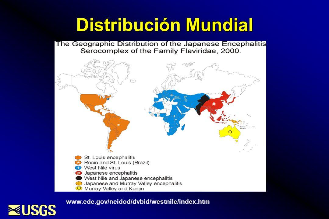 Distribución Mundial www.cdc.gov/ncidod/dvbid/westnile/index.htm