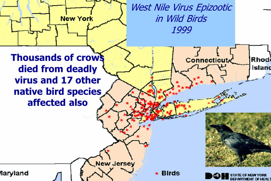 West Nile Virus Epizootic in Wild Birds
