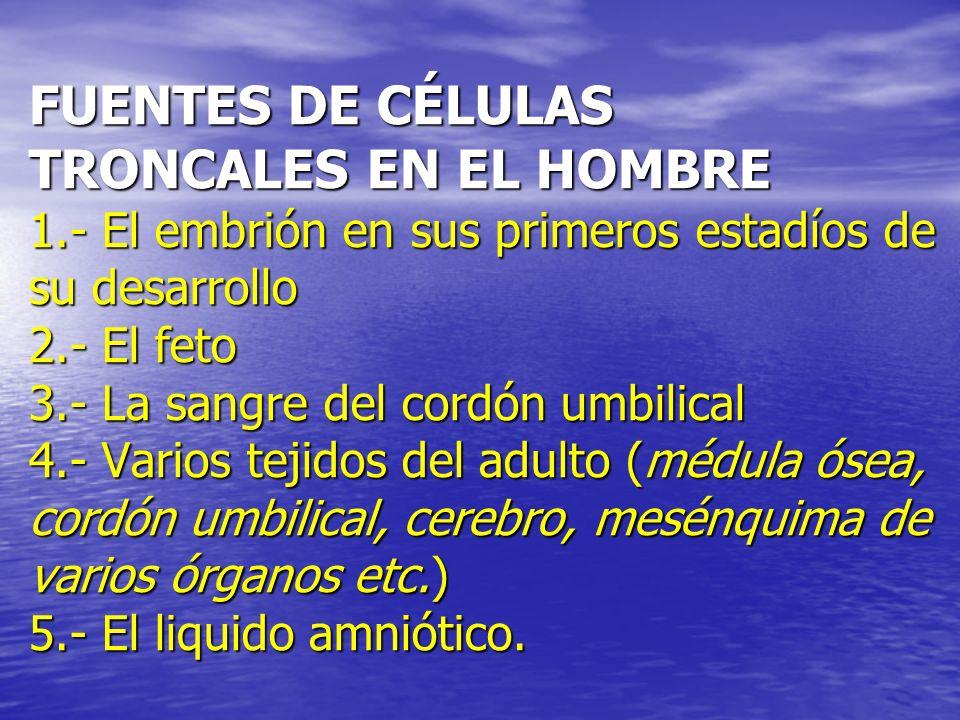 FUENTES DE CÉLULAS TRONCALES EN EL HOMBRE 1