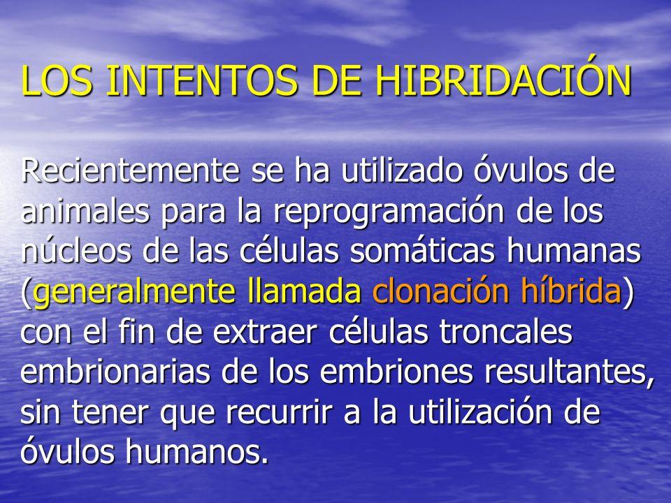 LOS INTENTOS DE HIBRIDACIÓN Recientemente se ha utilizado óvulos de animales para la reprogramación de los núcleos de las células somáticas humanas (generalmente llamada clonación híbrida) con el fin de extraer células troncales embrionarias de los embriones resultantes, sin tener que recurrir a la utilización de óvulos humanos.
