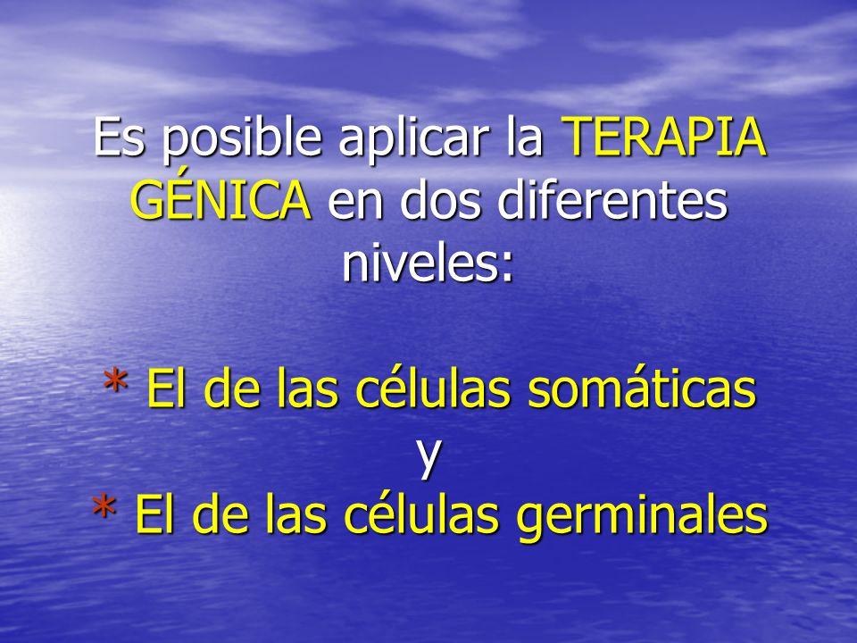 Es posible aplicar la TERAPIA GÉNICA en dos diferentes niveles: