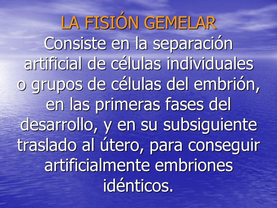 LA FISIÓN GEMELAR Consiste en la separación artificial de células individuales o grupos de células del embrión, en las primeras fases del desarrollo, y en su subsiguiente traslado al útero, para conseguir artificialmente embriones idénticos.