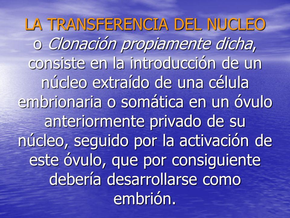 LA TRANSFERENCIA DEL NUCLEO o Clonación propiamente dicha, consiste en la introducción de un núcleo extraído de una célula embrionaria o somática en un óvulo anteriormente privado de su núcleo, seguido por la activación de este óvulo, que por consiguiente debería desarrollarse como embrión.