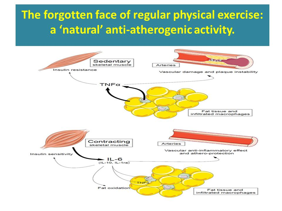 The forgotten face of regular physical exercise: a 'natural' anti-atherogenic activity.