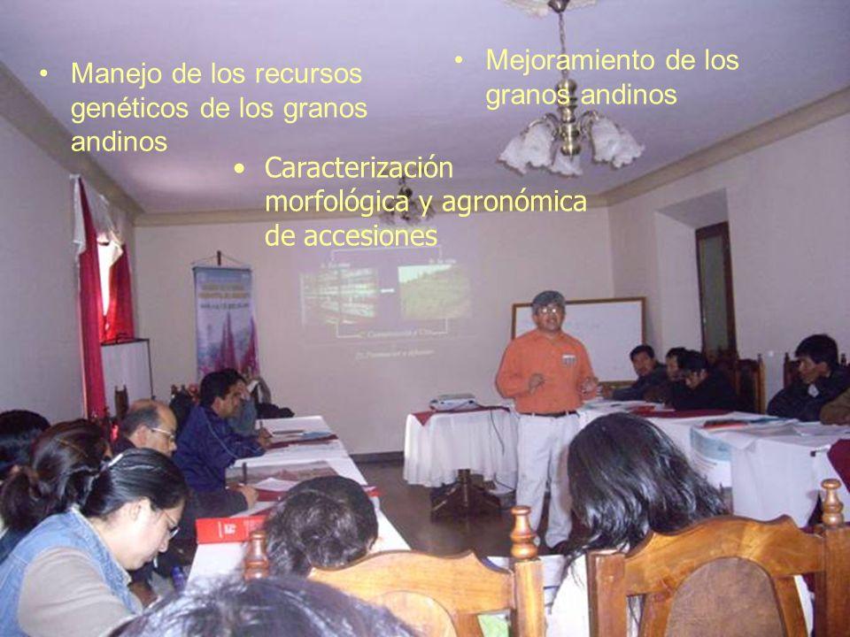 Mejoramiento de los granos andinos