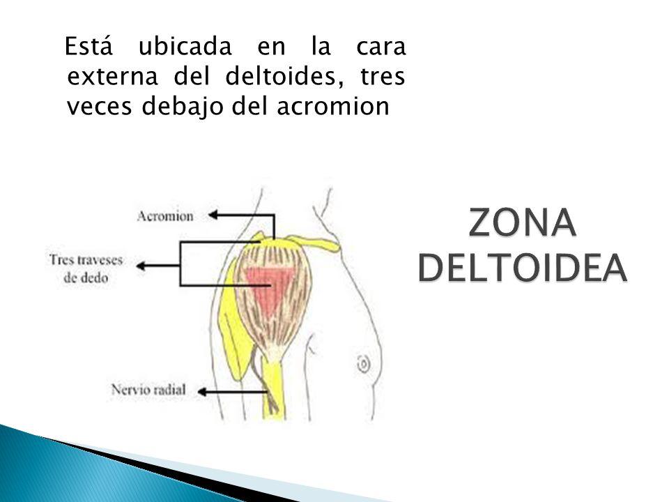 ZONA DELTOIDEA Está ubicada en la cara externa del deltoides, tres veces debajo del acromion