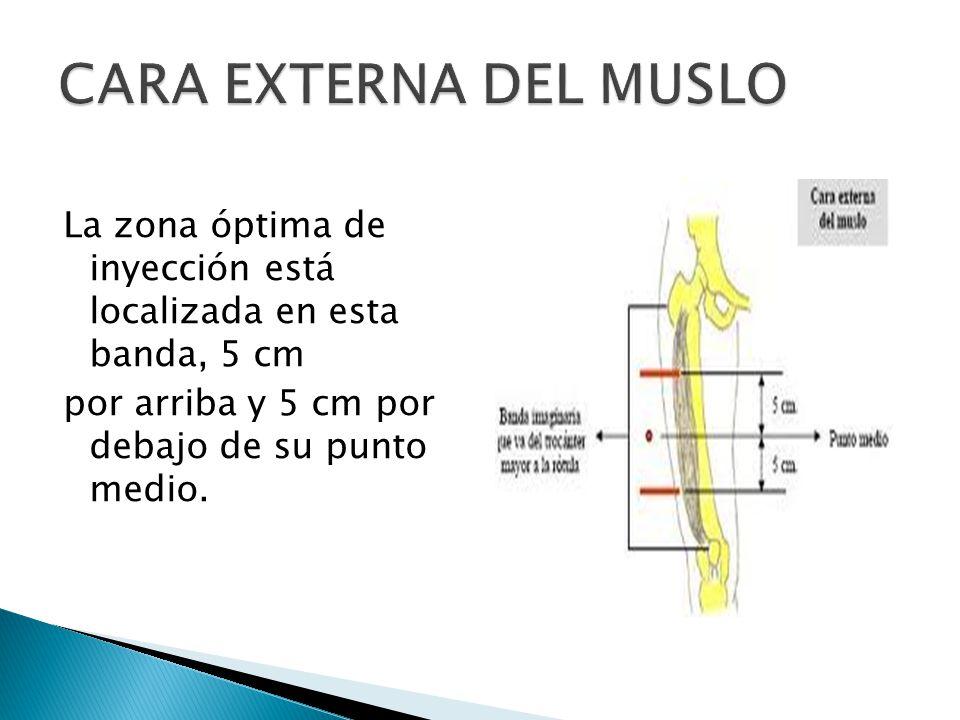 CARA EXTERNA DEL MUSLO La zona óptima de inyección está localizada en esta banda, 5 cm por arriba y 5 cm por debajo de su punto medio.
