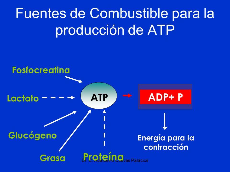 Fuentes de Combustible para la producción de ATP