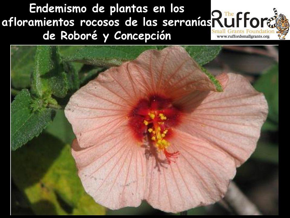 Endemismo de plantas en los afloramientos rocosos de las serranías de Roboré y Concepción