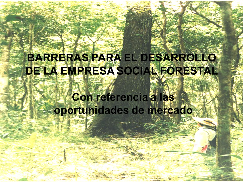 BARRERAS PARA EL DESARROLLO DE LA EMPRESA SOCIAL FORESTAL