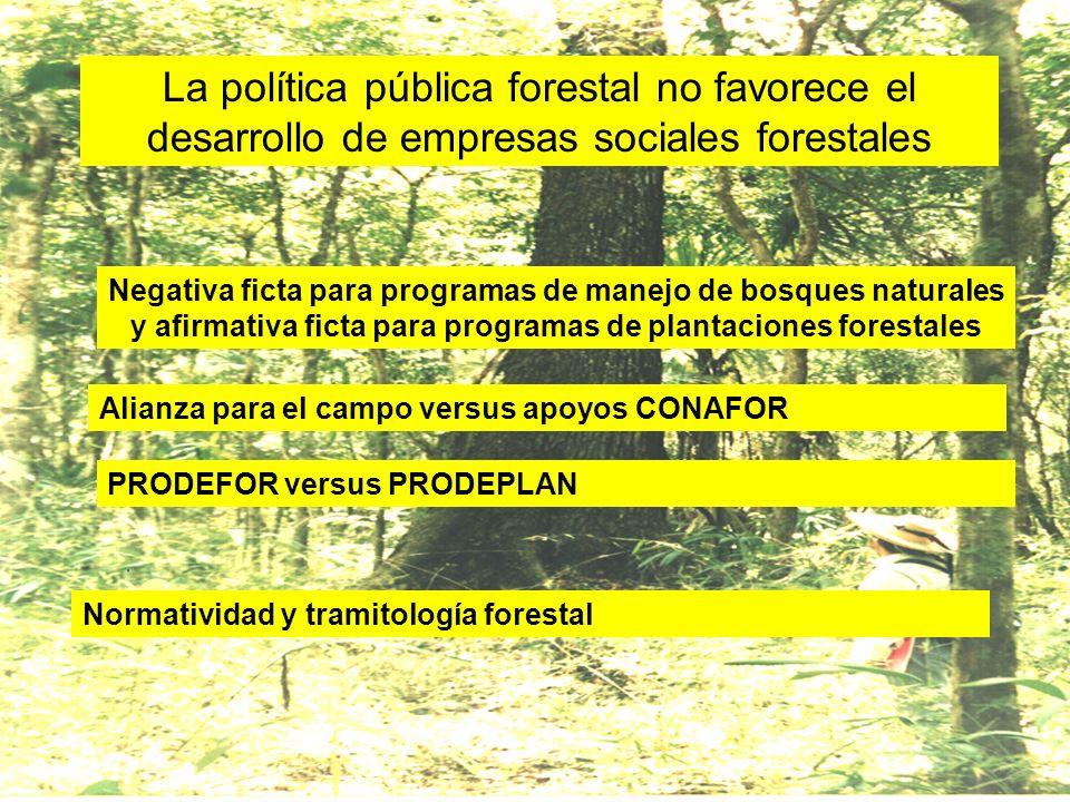 La política pública forestal no favorece el desarrollo de empresas sociales forestales