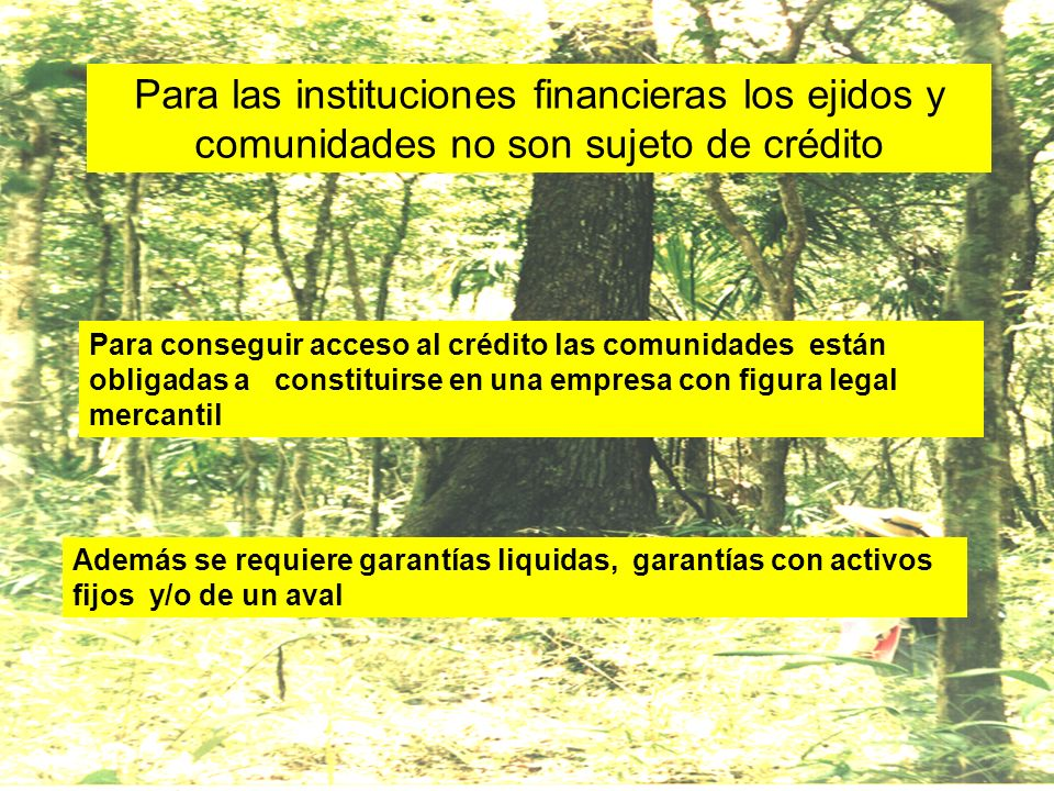 Para las instituciones financieras los ejidos y comunidades no son sujeto de crédito