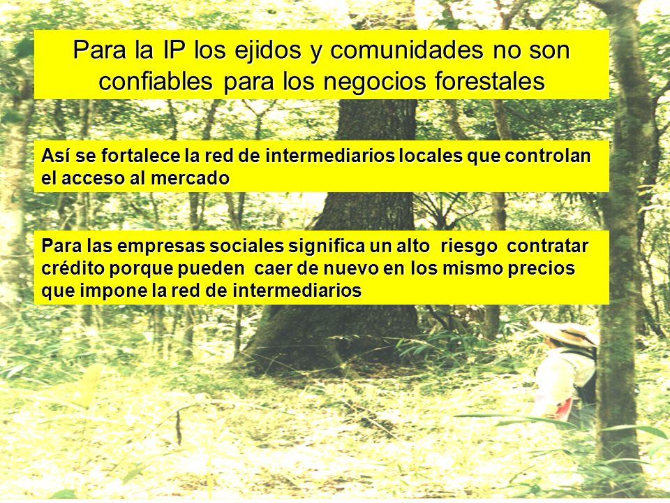 Para la IP los ejidos y comunidades no son confiables para los negocios forestales