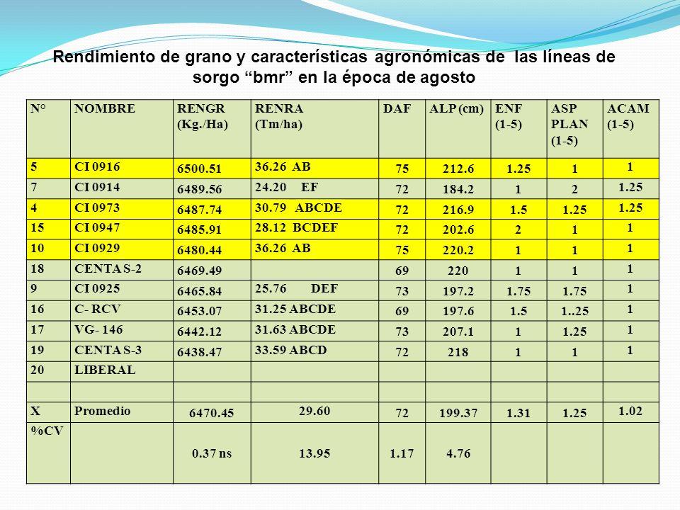 Rendimiento de grano y características agronómicas de las líneas de sorgo bmr en la época de agosto