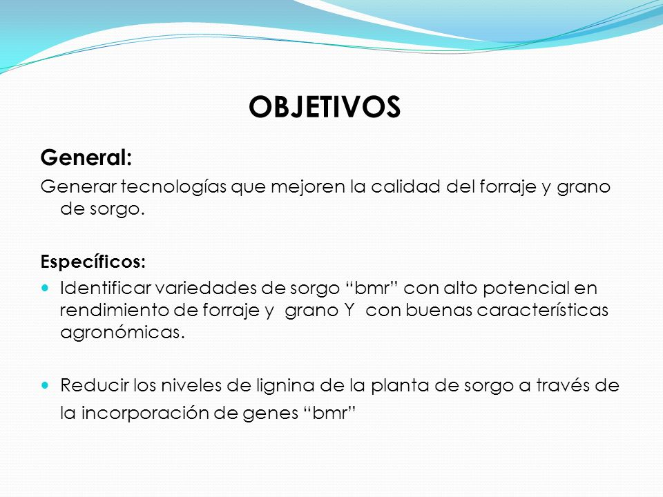 OBJETIVOS General: Generar tecnologías que mejoren la calidad del forraje y grano de sorgo. Específicos: