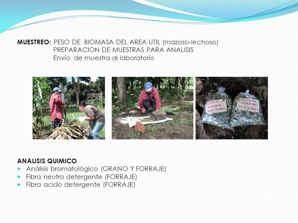 MUESTREO: PESO DE BIOMASA DEL AREA UTIL (mazoso-lechoso)