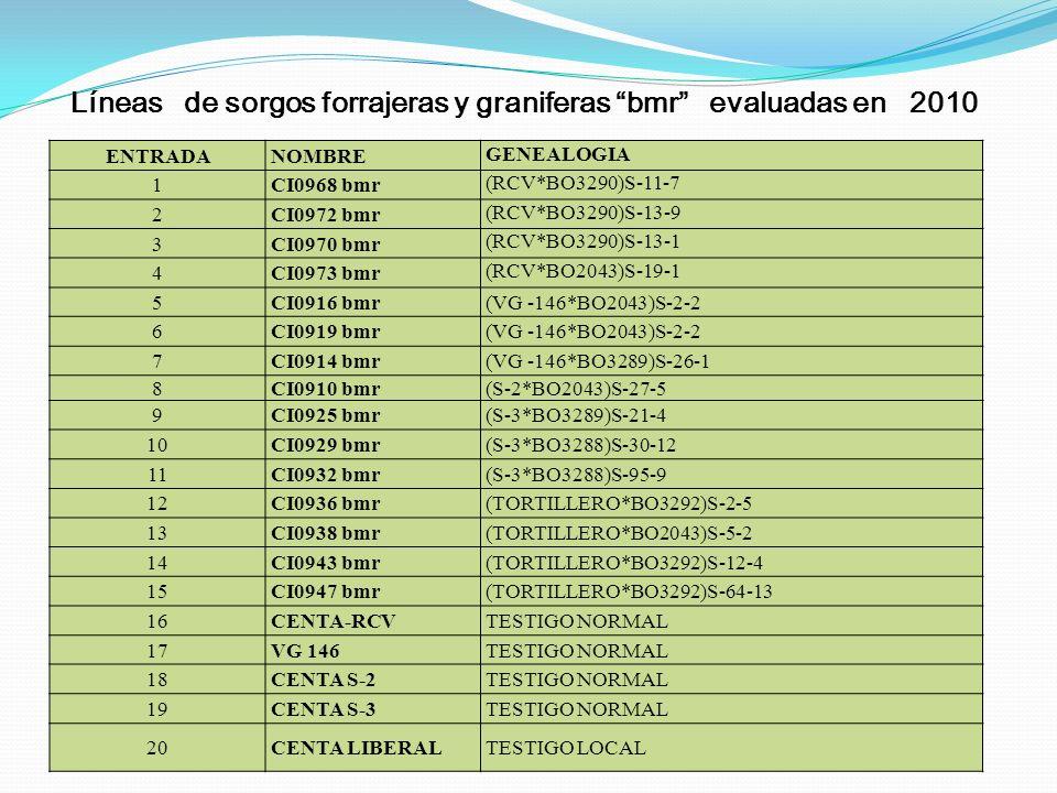 Líneas de sorgos forrajeras y graniferas bmr evaluadas en 2010