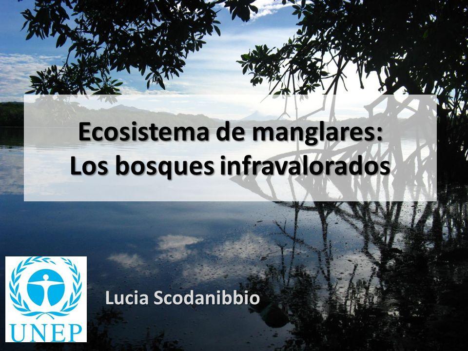 Ecosistema de manglares: Los bosques infravalorados