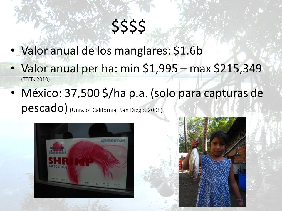 $$$$ Valor anual de los manglares: $1.6b