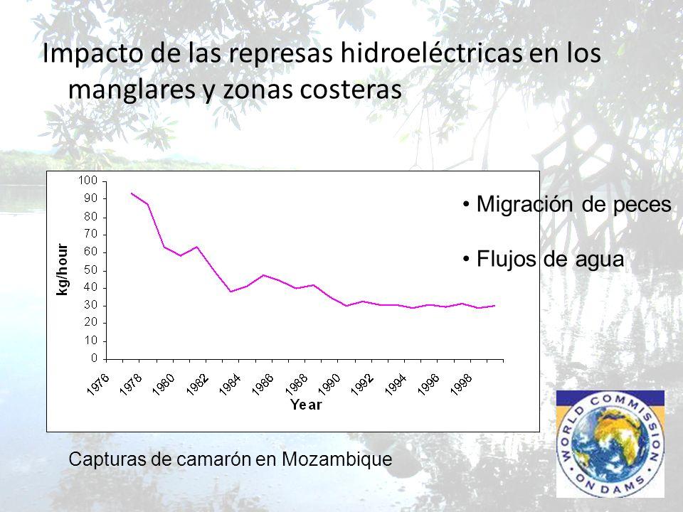 Impacto de las represas hidroeléctricas en los manglares y zonas costeras