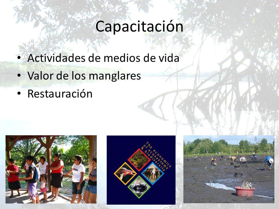 Capacitación Actividades de medios de vida Valor de los manglares