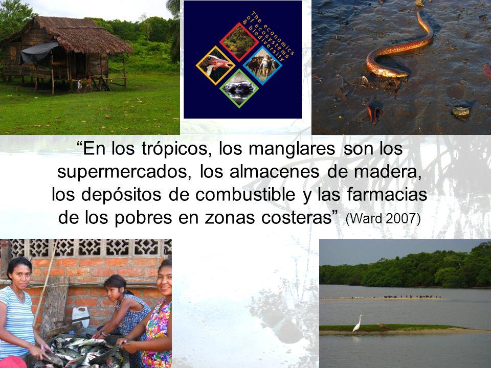 En los trópicos, los manglares son los supermercados, los almacenes de madera, los depósitos de combustible y las farmacias de los pobres en zonas costeras (Ward 2007)
