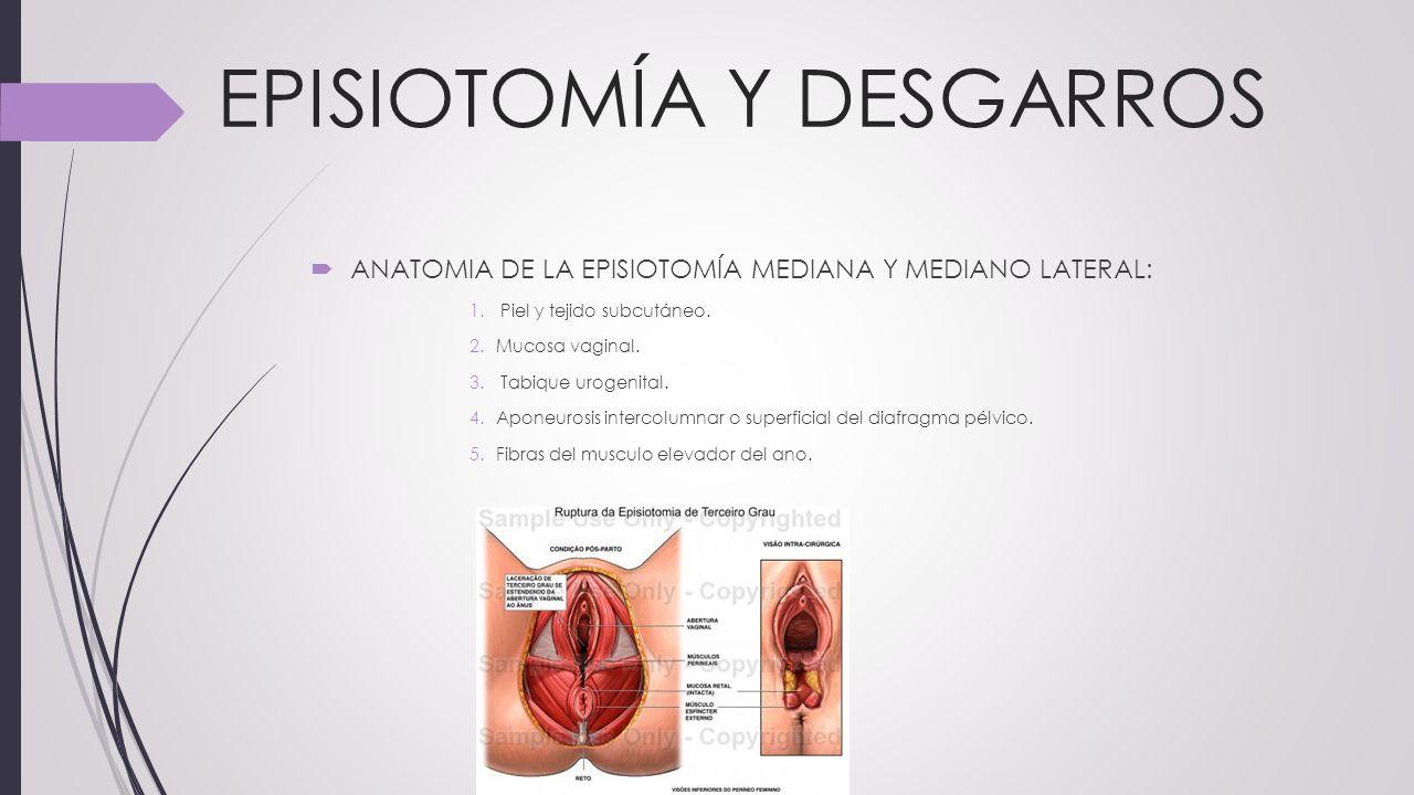 Lujoso Anatomía De La Zona Vaginal Componente - Anatomía de Las ...