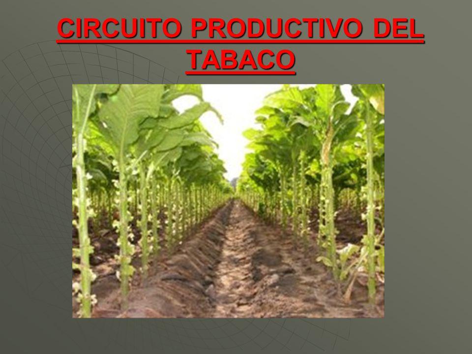 Circuito Productivo : Circuito productivo del tabaco ppt video online descargar