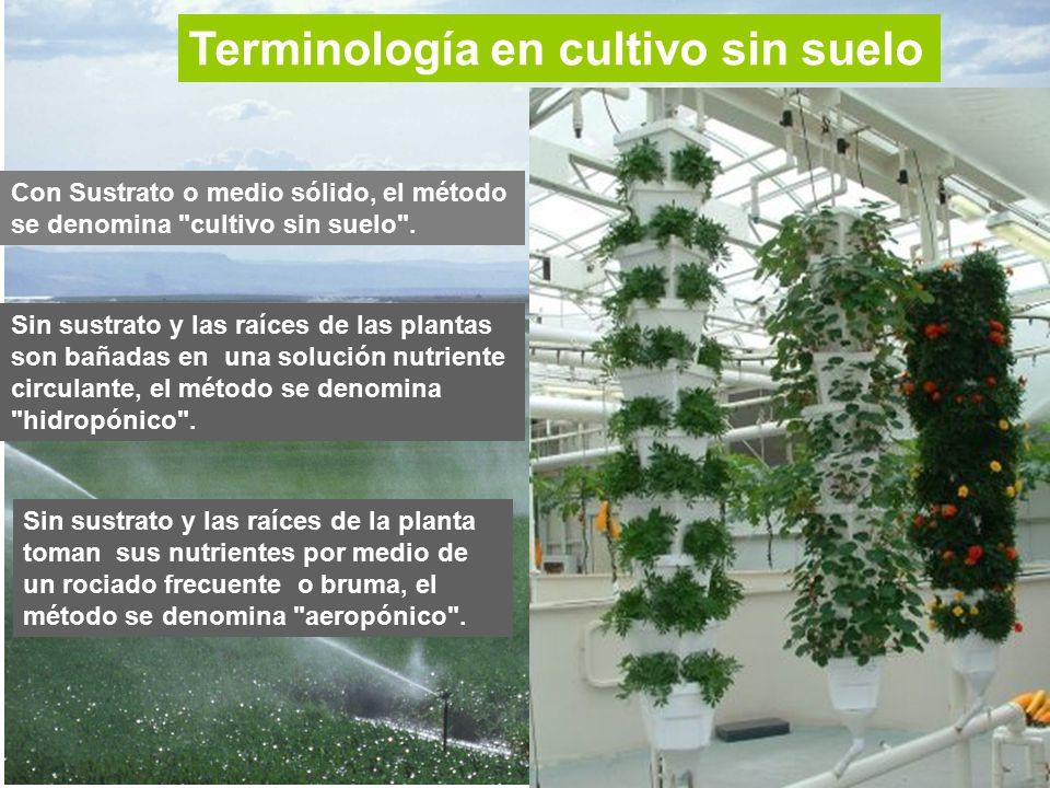 terminologa en cultivo sin suelo