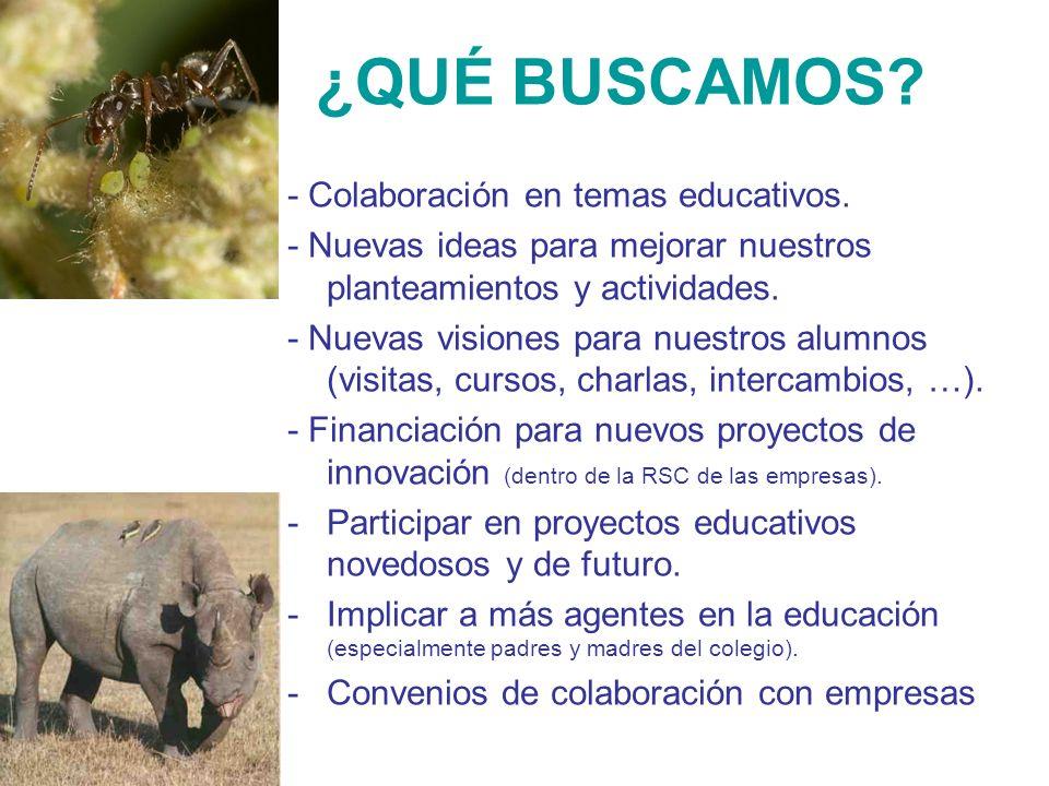 ¿QUÉ BUSCAMOS - Colaboración en temas educativos.