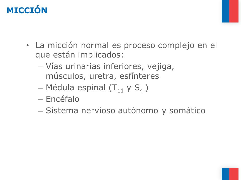 MICCIÓN La micción normal es proceso complejo en el que están implicados: Vías urinarias inferiores, vejiga, músculos, uretra, esfínteres.