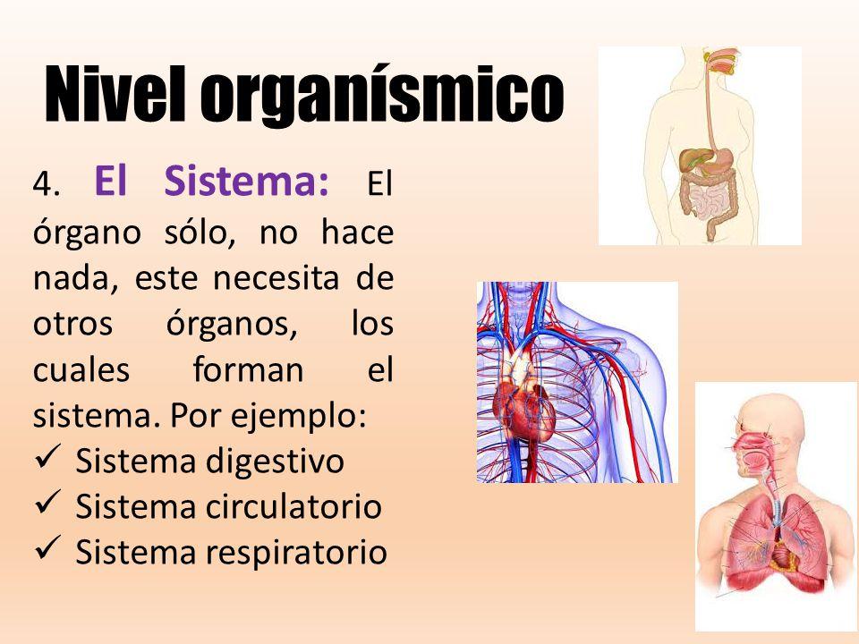 Perfecto Imágenes Del Sistema De órganos Imagen - Anatomía de Las ...