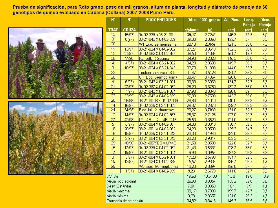 Prueba de significación, para Rdto grano, peso de mil granos, altura de planta, longitud y diámetro de panoja de 30 genotipos de quinua evaluado en Cabana (Collana) 2007-2008 Puno-Perú.