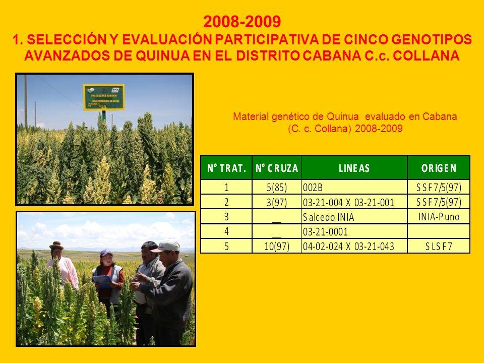 2008-2009 1. SELECCIÓN Y EVALUACIÓN PARTICIPATIVA DE CINCO GENOTIPOS AVANZADOS DE QUINUA EN EL DISTRITO CABANA C.c. COLLANA