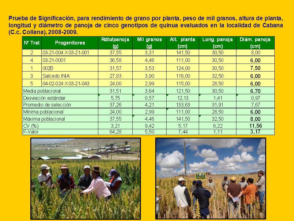 Prueba de Significación, para rendimiento de grano por planta, peso de mil granos, altura de planta, longitud y diámetro de panoja de cinco genotipos de quinua evaluados en la localidad de Cabana (C.c. Collana), 2008-2009.