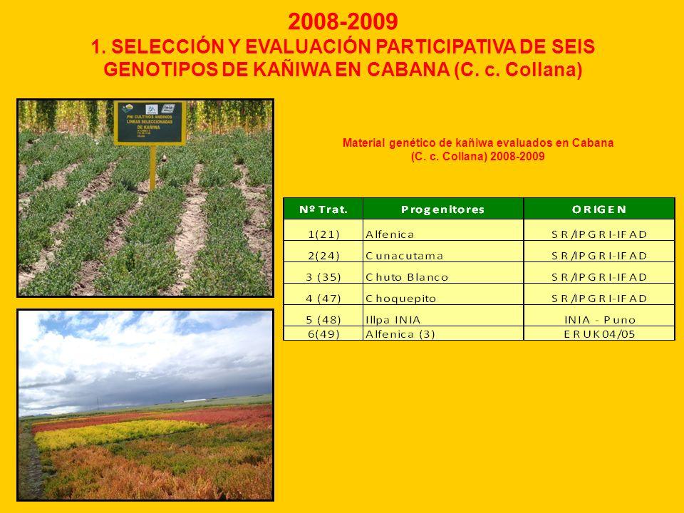 2008-2009 1. SELECCIÓN Y EVALUACIÓN PARTICIPATIVA DE SEIS GENOTIPOS DE KAÑIWA EN CABANA (C. c. Collana)