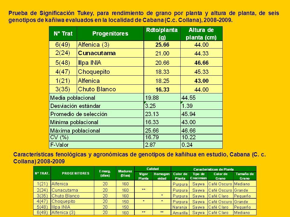 Prueba de Significación Tukey, para rendimiento de grano por planta y altura de planta, de seis genotipos de kañiwa evaluados en la localidad de Cabana (C.c. Collana), 2008-2009.