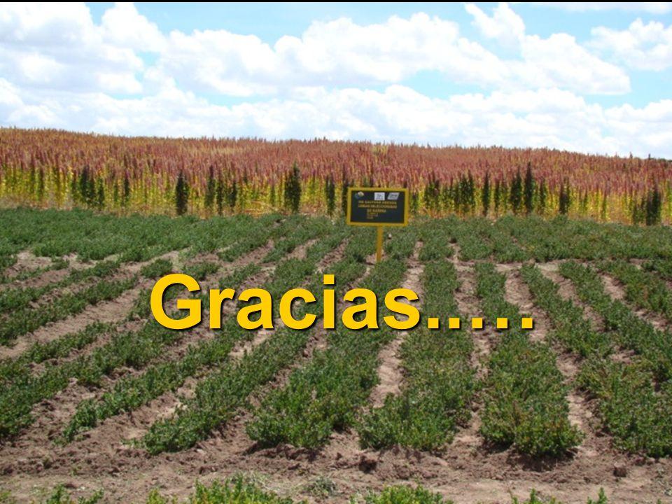 Gracias..…