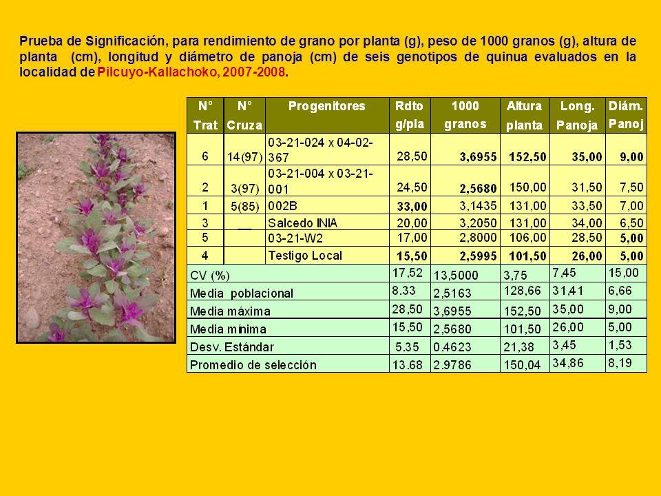 Prueba de Significación, para rendimiento de grano por planta (g), peso de 1000 granos (g), altura de planta (cm), longitud y diámetro de panoja (cm) de seis genotipos de quinua evaluados en la localidad de Pilcuyo-Kallachoko, 2007-2008.