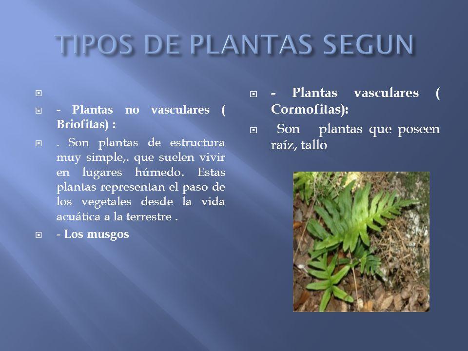 Plantas tipos de plantas seg n su construcci n seg n su for Cuales son los tipos de plantas