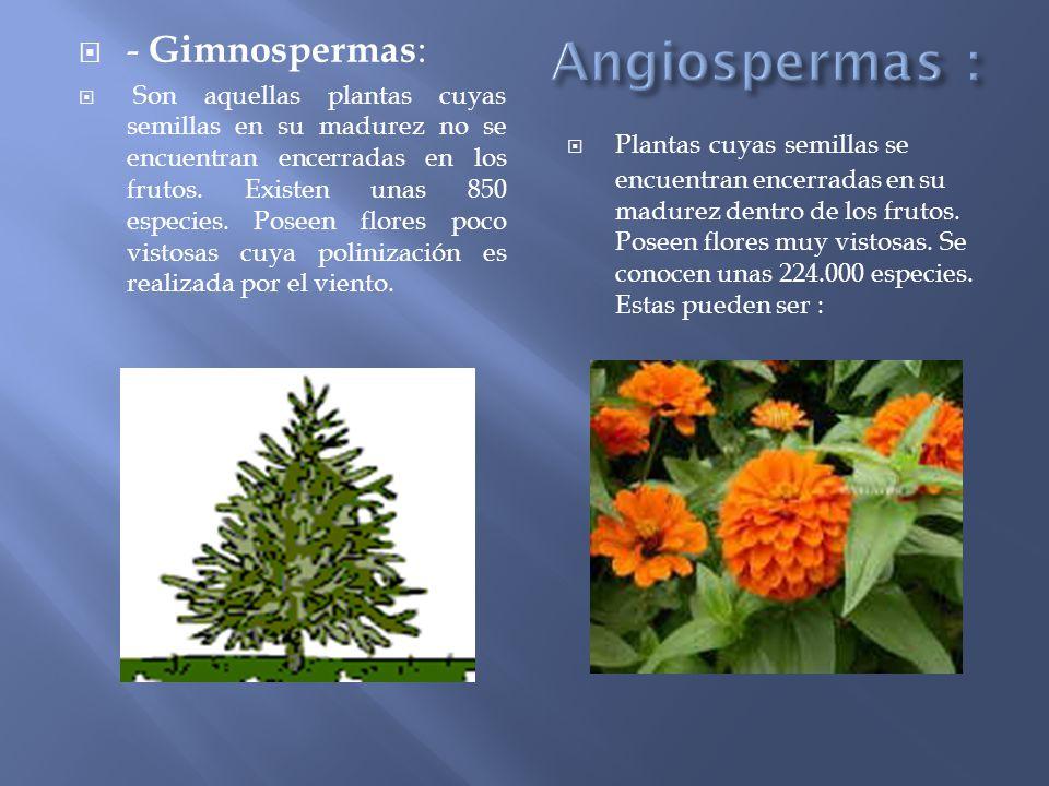 Plantas tipos de plantas seg n su construcci n seg n su for Que son plantas ornamentales ejemplos