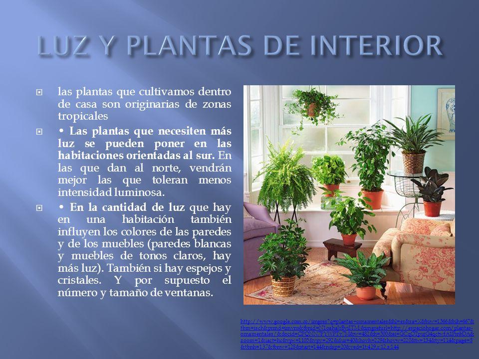 Plantas tipos de plantas seg n su construcci n seg n su - Plantas de interior sin luz ...